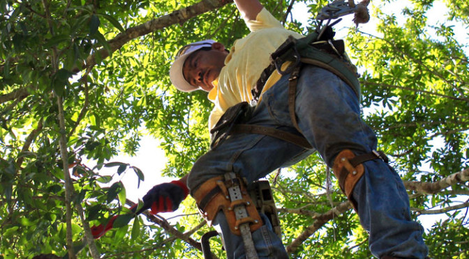 tree_trimmers_usa_tree_trimming_2-672x372